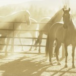 Orange-tone_horse-10