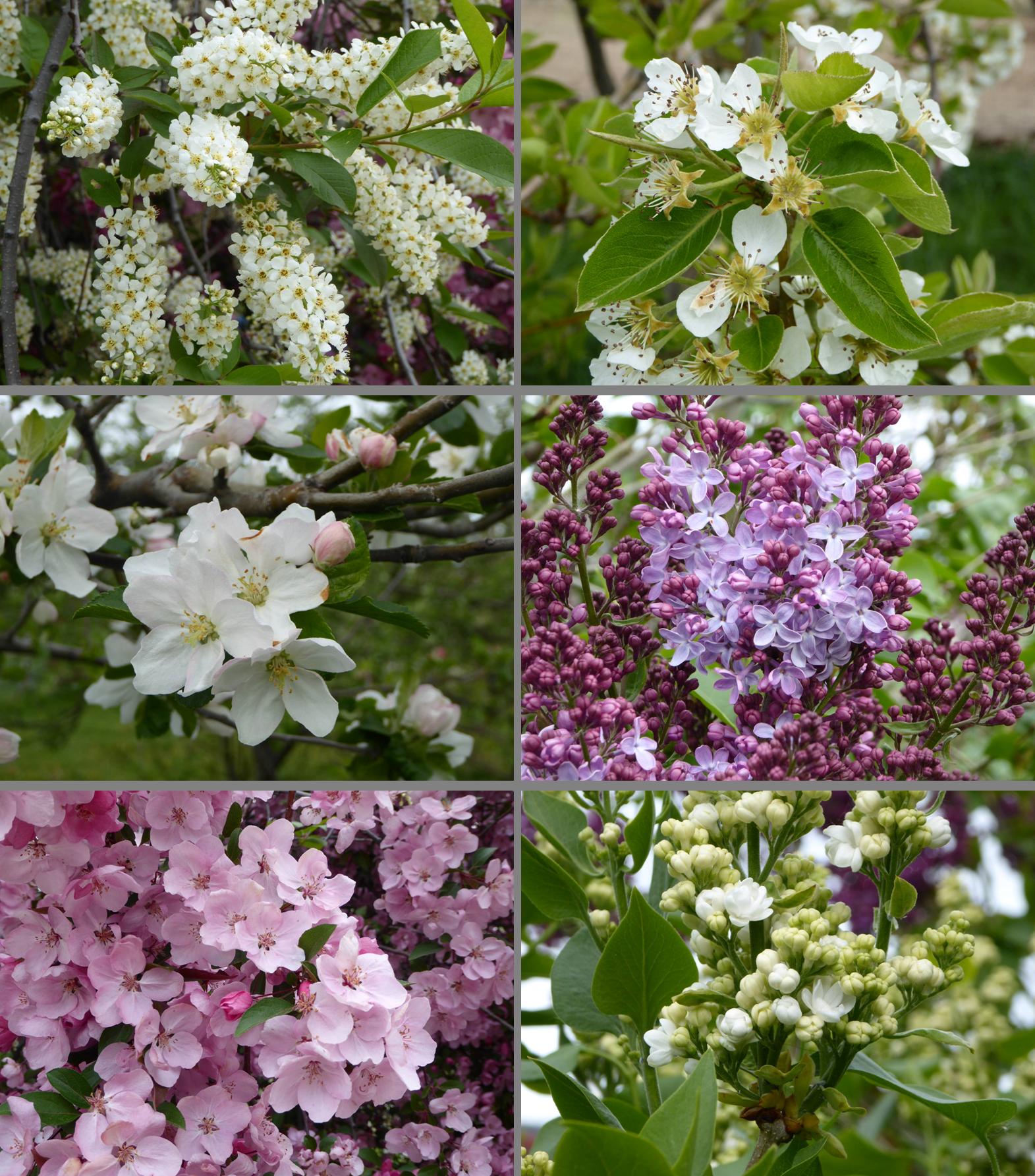 2016_Spring Blooms