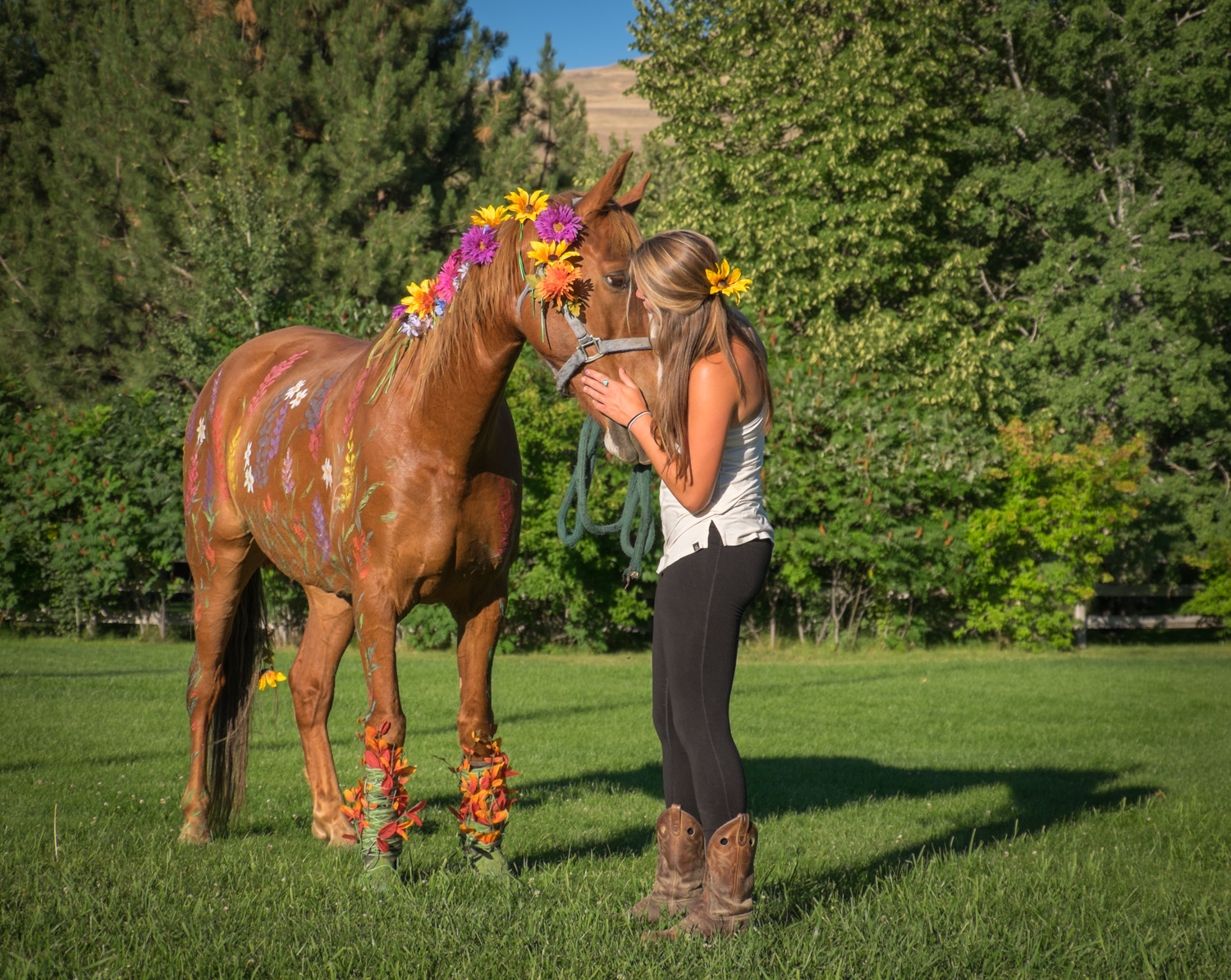 Dunrovin Painted pony 2015-7288