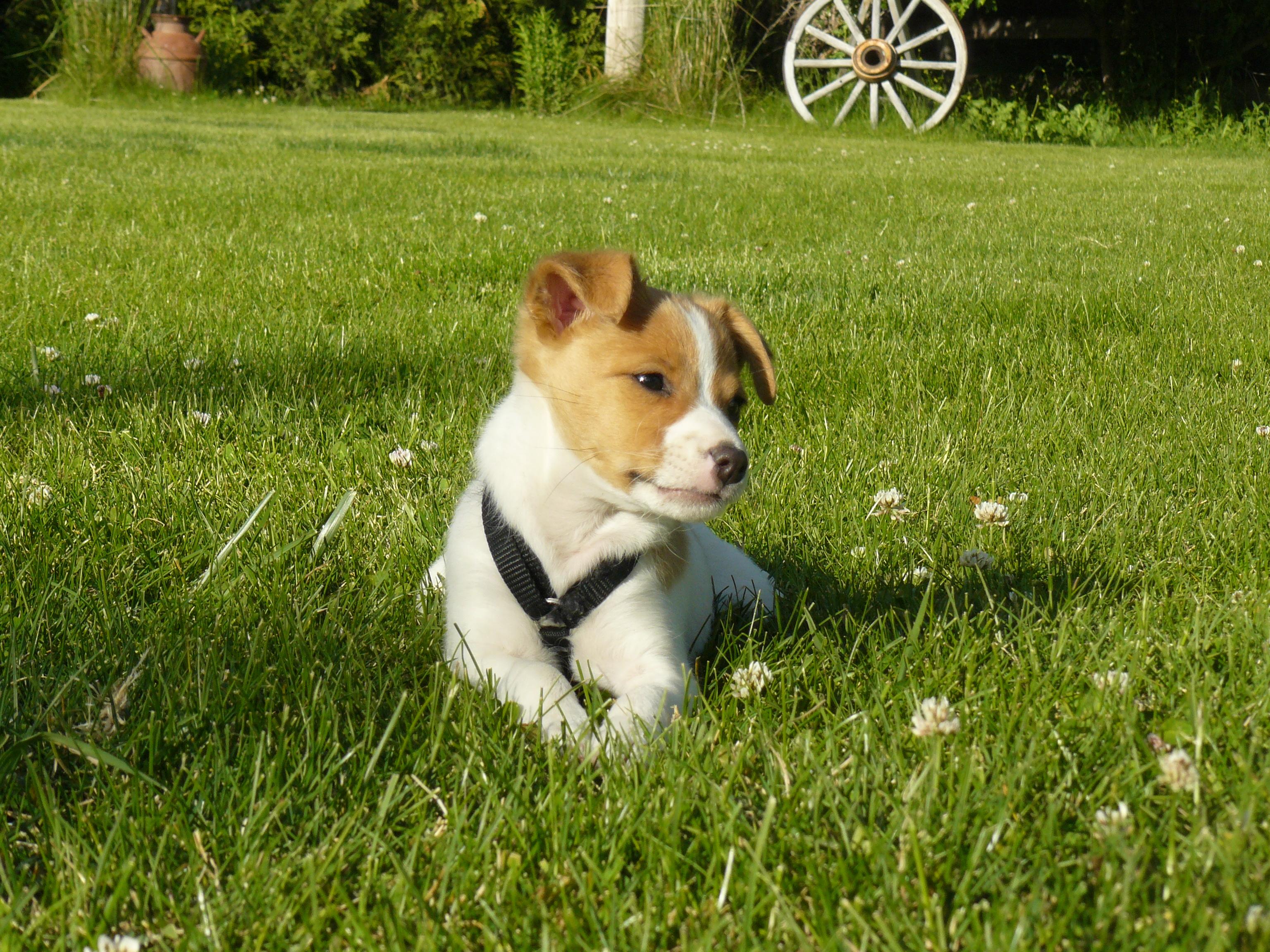 Killer Kola in the grass